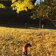 秋から冬へ〜〜