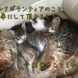 取材記事:子猫のミル…