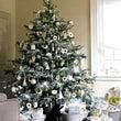 12月クリスマスセッ…
