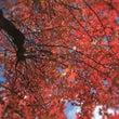 ♡ 魅惑の秋 ♡