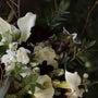 #季節の花束 パフィ…