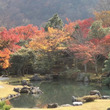 嵯峨嵐山天龍寺の紅葉