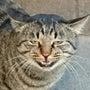 猫がネコっとわろた