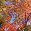 秋色ハラハラ♪