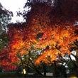 岡山後楽園秋の幻想庭…