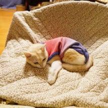 冬のネム猫