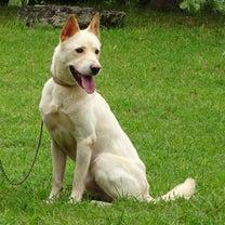 【拡散希望】八重山保健所収容犬猫 家族を大募集。の記事に添付されている画像