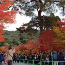 ☆紅葉の京都☆