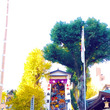 福岡!櫛田神社!宗像…