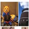 プラネタリウム聴導犬…