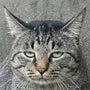 出遅れた猫
