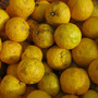 塩練り柚子、26.9…