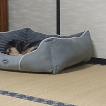 寝坊しました