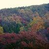 京都へ紅葉を見に行ってきました。の画像
