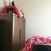 別宅の猫たち~394…