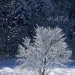 北アルプス山麓 雪の…