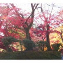 弘前城菊と紅葉まつり…