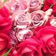 薔薇が薔薇らしくある…