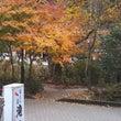 【 滝美館周辺の紅葉…