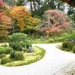 京都の紅葉☆曼殊院門…