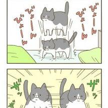 寝床のトンちゃんと動…