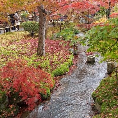 もみじ狩りin京都の記事に添付されている画像