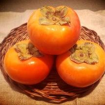 今週は柿酵母も♪