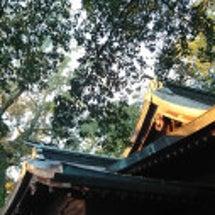 神社で夕陽を見送るひ…