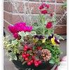 冬になると♡フレッシュフラワー◆KiyoのDiaryの画像