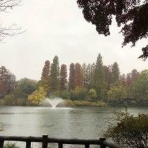 雨の井の頭恩賜公園