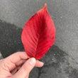 紅葉に合うボルドーリ…