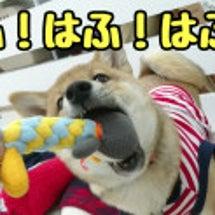 【犬の保育園】はふ!…