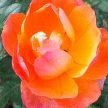 イエローオレンジのグ…