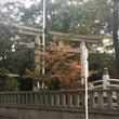 寒川神社と菊の花
