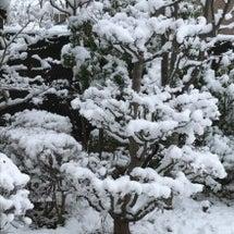 今朝の庭の風景