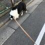 愛犬と散歩できる幸せ