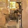 11月のスタジオロンの画像