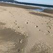 砂浜、独り占め