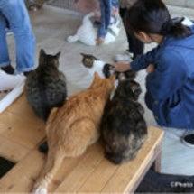 2月関東猫セミナー …