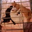 母白猫と仔猫たちと夏…