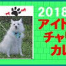 神奈川県チワワ多頭飼…
