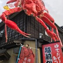 今年も蟹の季節になり…