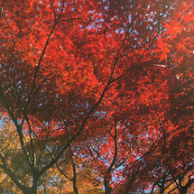 秋の一日、紅葉狩り