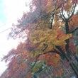 京都の紅葉とクリスマ…