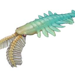 画像 パンブデ・ルリ子、シリウスパセット動物群を語る の記事より 8つ目
