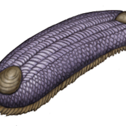 画像 パンブデ・ルリ子、シリウスパセット動物群を語る の記事より 9つ目