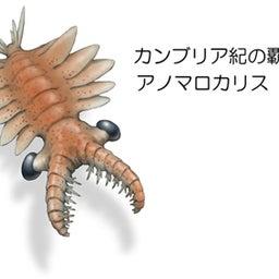 画像 パンブデ・ルリ子、シリウスパセット動物群を語る の記事より 3つ目