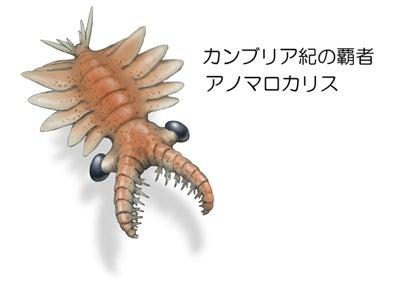 パンブデ・ルリ子、シリウスパセット動物群を語る | 川崎悟司 ...