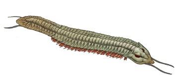 パンブデ・ルリ子、シリウスパセット動物群を語る