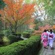 【庭園】「お茶の京都…